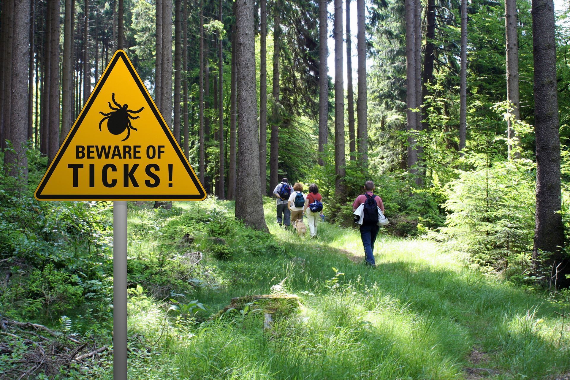 Walking in a forest with a risk of ticks - an IC blog