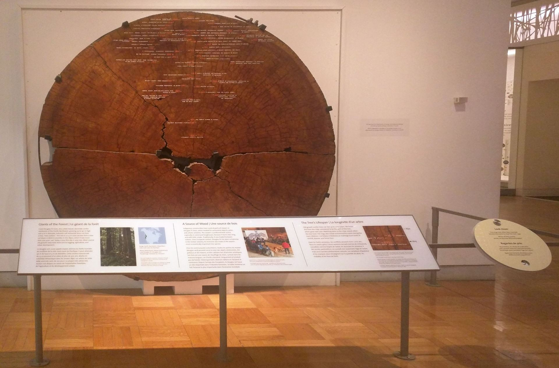 Tree cookie on display at Royal Ontario Museum - an IC blog